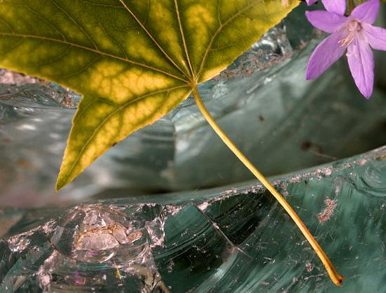 Amberblad op Blauw Glas