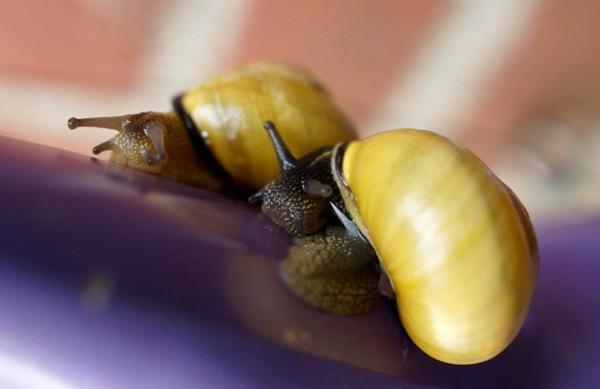 Slakken op Paarshaas