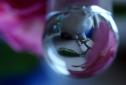 glazen-bol-1-pootjes-roos