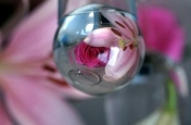 glazen-bol-12-b-lelie-roos
