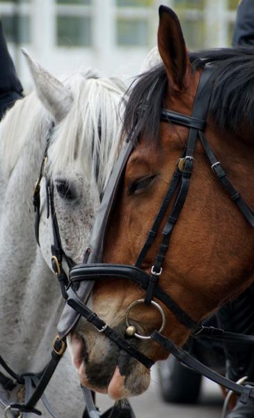 Paarden 2a