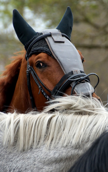 Paarden 6