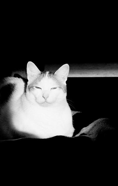 Katten ZwW 7
