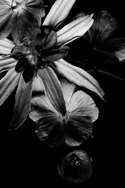 Compositie met Geraniums